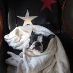 Pensionshund Fidel